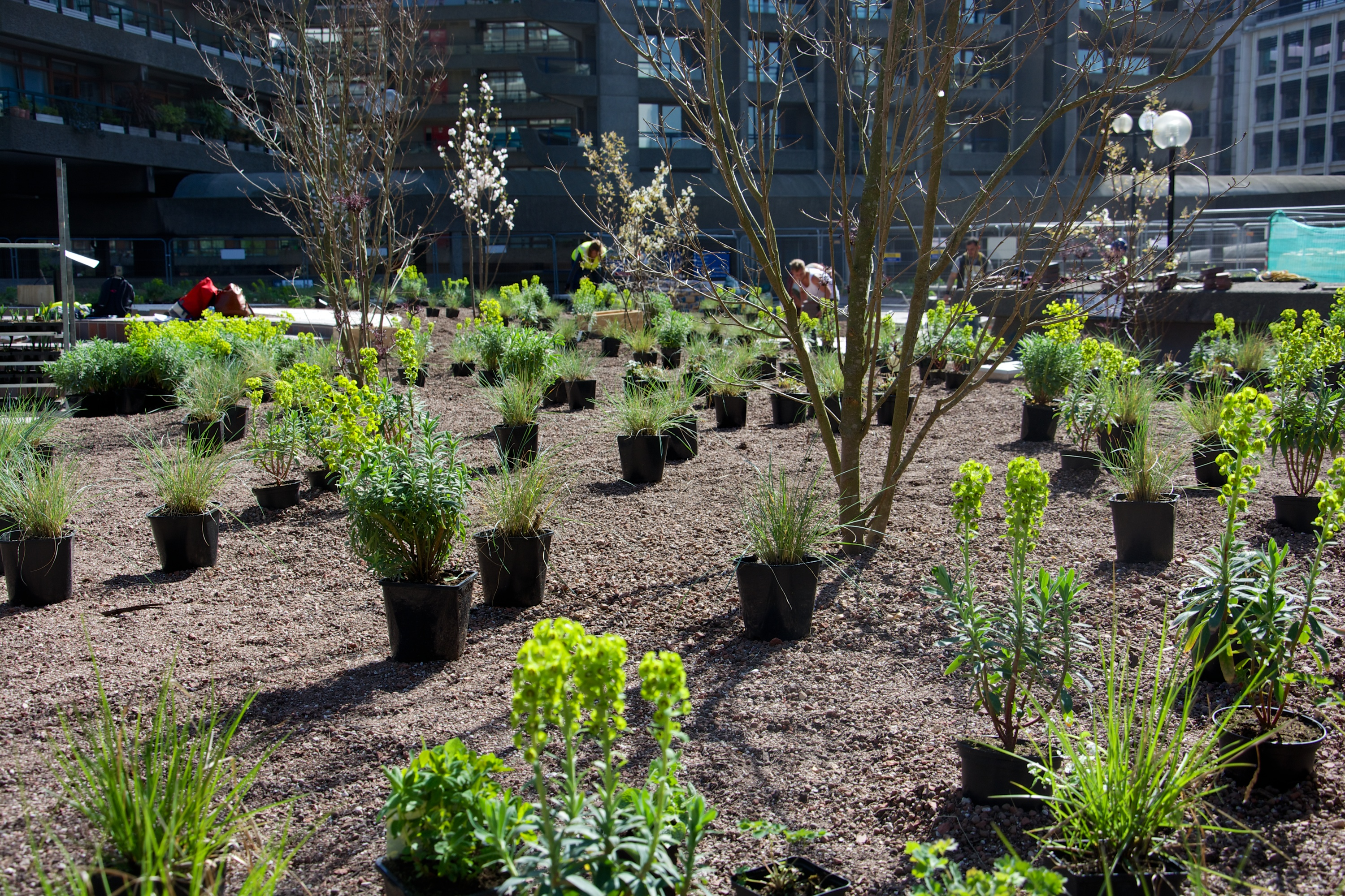 Year round plants for flower beds - Setting Out The Plantings